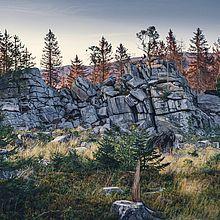 Klippen im Wald