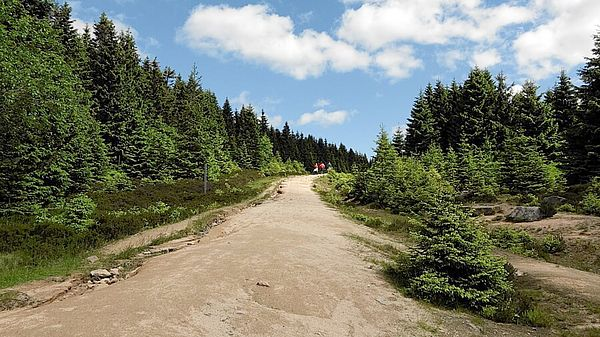 Wanderweg Nationalpark Harz